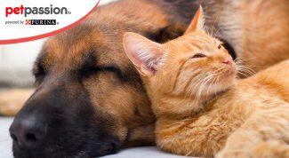 Educare cane e gatto convivenza