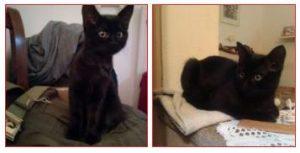 Mya gatto nero
