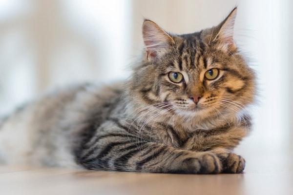 gatto-animale-notturno