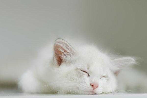 gatto che drome