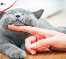 Giornata nazionale gatto