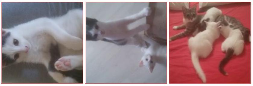 Convivenza 7 gatti