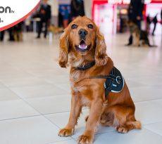 Trasporto cane in aereo
