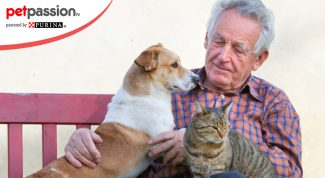 Anziani dogsitter a milano
