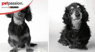 Progetto fotografico cani