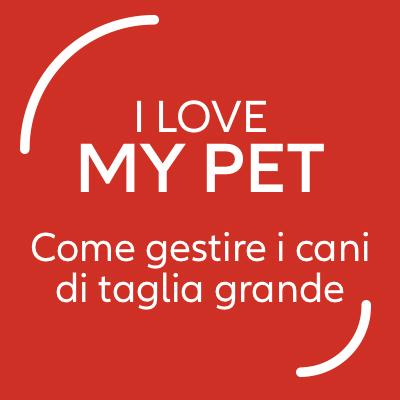 Cani di taglia grande: consigli utili per l'accoglienza in casa