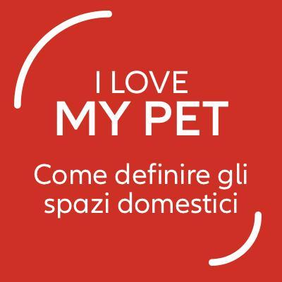 Cani di piccola taglia: come definire gli spazi domestici