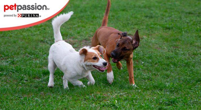 Giochi divertenti per cani