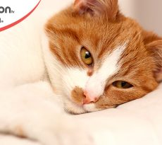 albumina bassa nel gatto