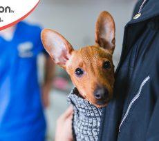 Olfatto cane individua tumori