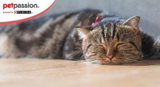 Malattie del pelo del gatto
