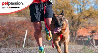 Cane e padrone sportivi