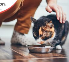 Alimentazione naturale cane e gatto