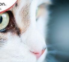 Gatto occhi rossi