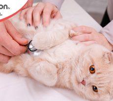 salmonella nel gatto