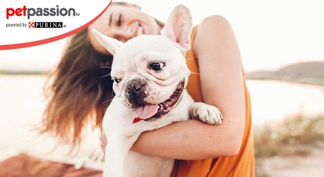 Nomi per cani come sceglierli bene petpassion
