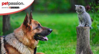 Convivenza cane e gatto cucciolo