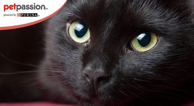 Museo del gatto nero a Napoli