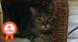 Pet della settimana_Camilla