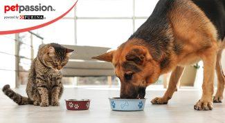 Ingredienti cibo per animali