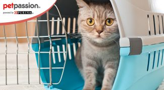 Trasportare il gatto in aereo