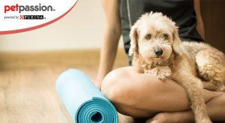 Doga, Yoga con i cani