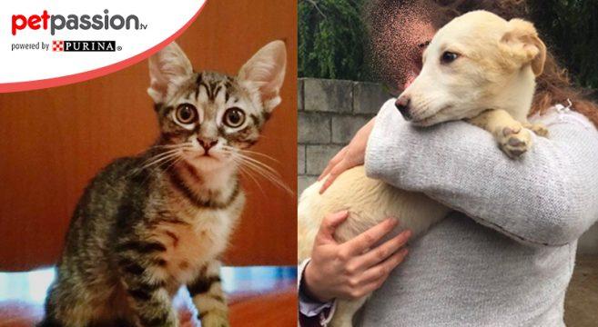 Adozioni cani e gatti