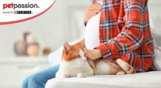 Gravidanza e gatti