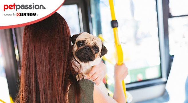 Cani gratis sui mezzi pubblici a milano