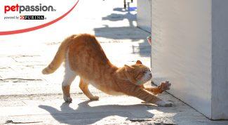 I gatti amano il sole
