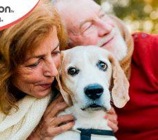 I cani sono più longevi