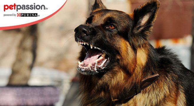 Rabbia del cane