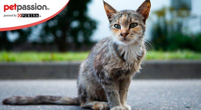 Dimagrimento improvviso nel gatto