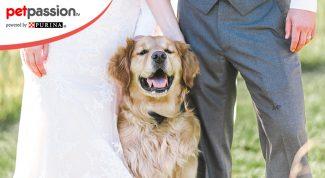 Affido cane in caso di divorzio