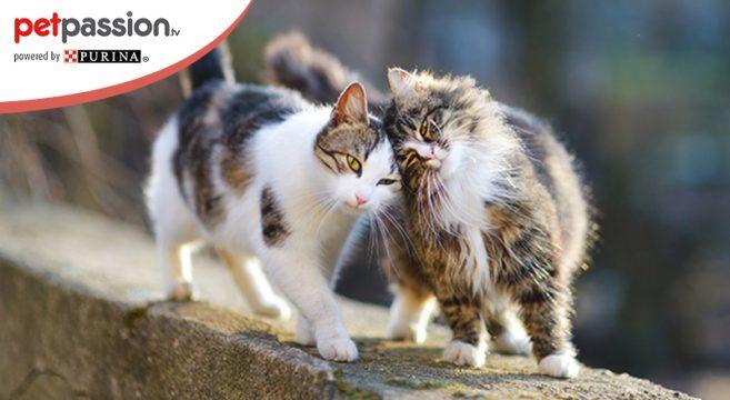 Segnali comportamento del gatto