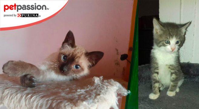 Gatti in adozione ottobre