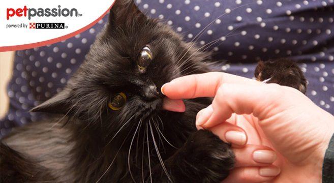 Gatto lecca il proprietario