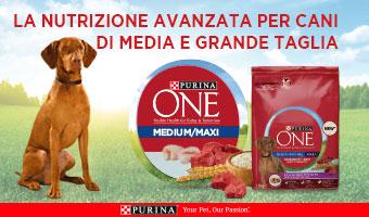 Purina One Medium Maxi