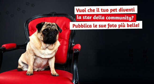 Pet star della community