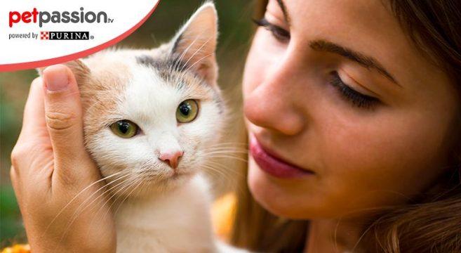 Gatti si affezionano uomo