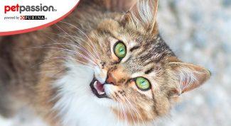 significato miagolii del gatto