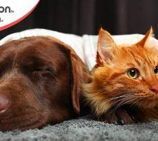 Gatti e cani inverno