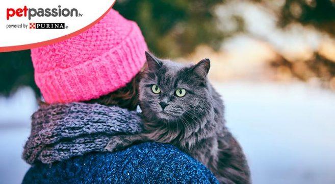 proteggere gatti dal freddo in inverno