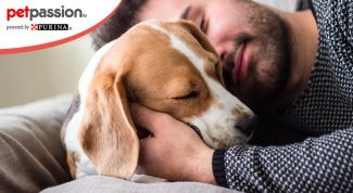 rapporto studio cane uomo