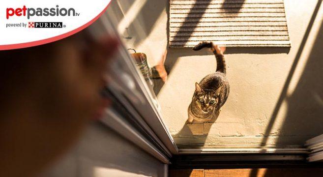 gatti porte