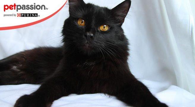 frasi gatti neri