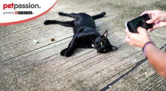 fotografare gatto