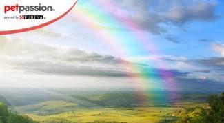 leggenda ponte arcobaleno