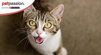Cosa da fastidio gatti