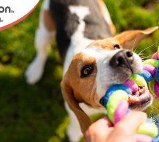 Giochi dei cani evitare